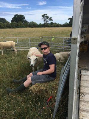 Sheep8