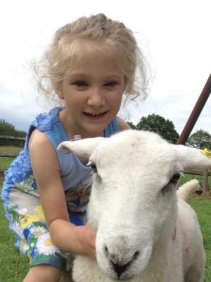 sheep blog 4